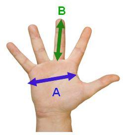 Taille de gants comment choisir calculer la bonne taille for Choisir des boules de petanque